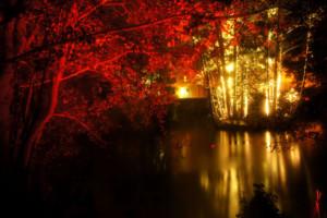 lights in alingsas